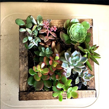 Small Succulent Planter Box (PRE-REGISTRATION FULL)