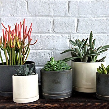 The Best Indoor Plant for Your Home